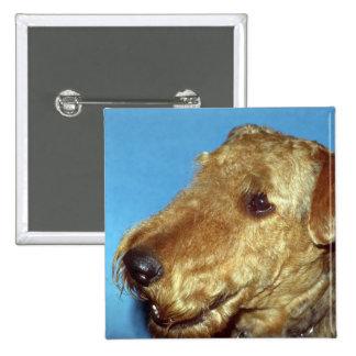 Irish Terrier Buttons