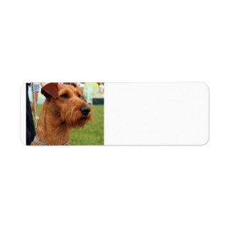 irish terrier.png label