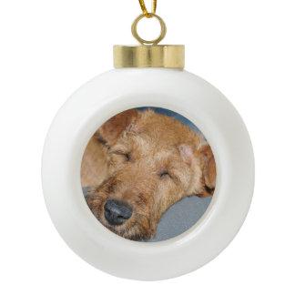 irish-terrier-sleepping