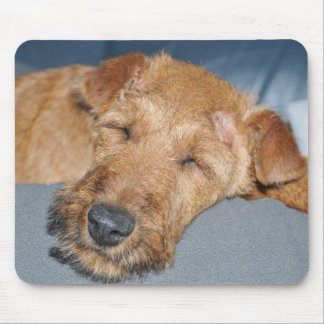 irish-terrier-sleepping