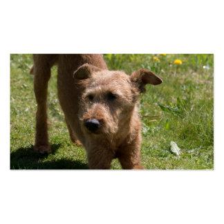 Irish Terrier Yoga Business Card