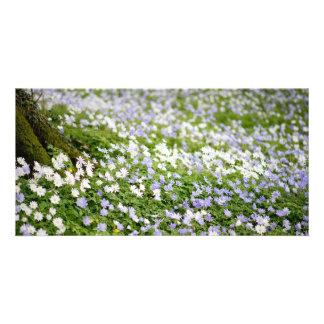 Irish Wildflowers Meadow Photo Card