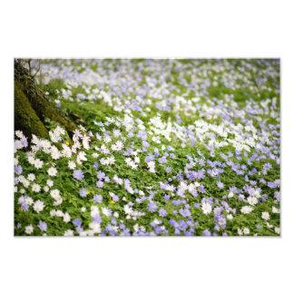 Irish Wildflowers Meadow Photo Print