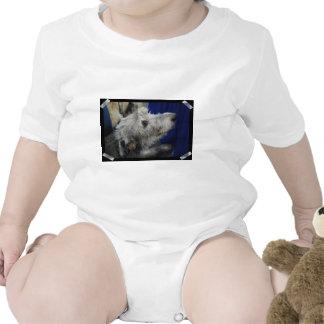 irish-wolfhound-2.jpg shirts