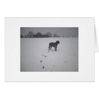 Irish wolfhound in the snow card