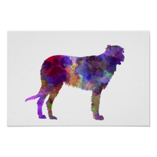 Irish Wolfhound in watercolor Poster
