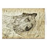 "Irish Wolfhound ""Let sleeping dogs lie"" Card"