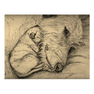 Irish Wolfhound mother and puppy Postcards