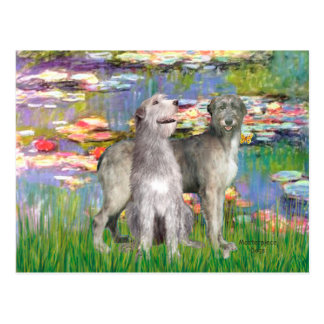 Irish Wolfhound Pair - Lilies 2 Postcard
