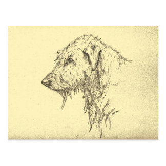 Irish Wolfhound Portrait Postcard