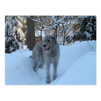 Irish wolfhound post card