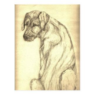 Irish Wolfhound Puppy Looking Back Postcard