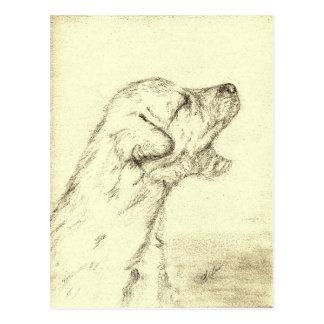 Irish Wolfhound Puppy Postcards