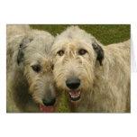 Irish Wolfhounds Cards