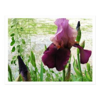 Iris's Postcard