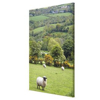 Irlanda occidental, península de la cañada, amplia lienzo envuelto para galerías