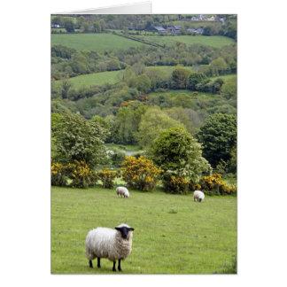 Irlanda occidental, península de la cañada, amplia felicitación