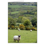 Irlanda occidental, península de la cañada, amplia tarjeta de felicitación
