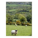 Irlanda occidental, península de la cañada, amplia tarjeta postal