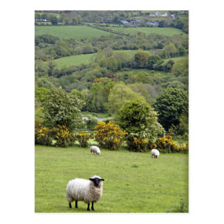 Irlanda occidental, península de la cañada, amplia postal