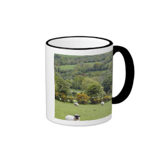 Irlanda occidental, península de la cañada, amplia taza de café