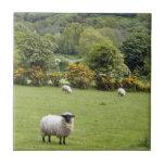 Irlanda occidental, península de la cañada azulejo cuadrado pequeño