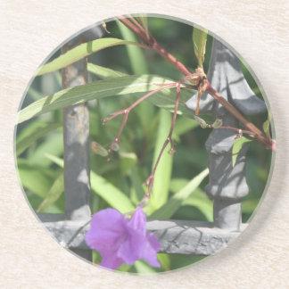 Iron fence, green leaves, purple flower sandstone coaster