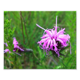 Ironweed Flowers Art Photo