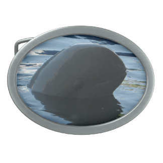 Irrawaddy Dolphin Peek-A-Boo Belt Buckles