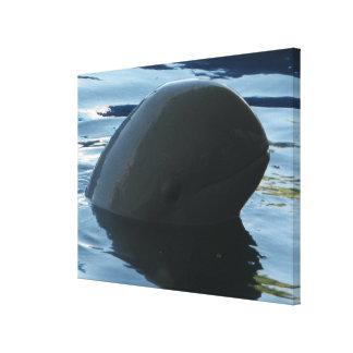 Irrawaddy Dolphin Peek-A-Boo Canvas Print