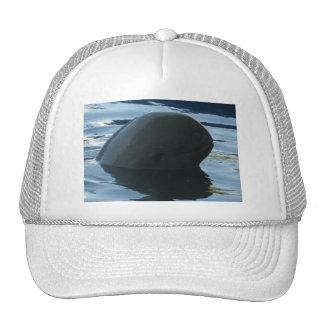 Irrawaddy Dolphin Peek-A-Boo Mesh Hats