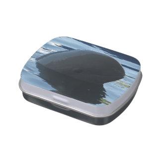 Irrawaddy Dolphin Peek-A-Boo Jelly Belly Tin