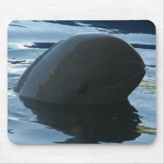Irrawaddy Dolphin Peek-A-Boo Mouse Pads