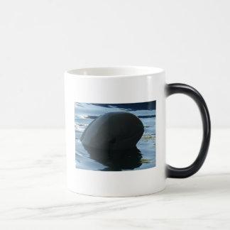 Irrawaddy Dolphin Peek-A-Boo 11 Oz Magic Heat Color-Changing Coffee Mug