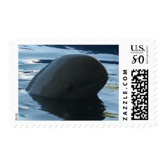 Irrawaddy Dolphin Peek-A-Boo Postage