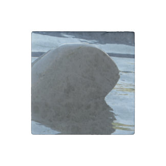 Irrawaddy Dolphin Peek-A-Boo Stone Magnet