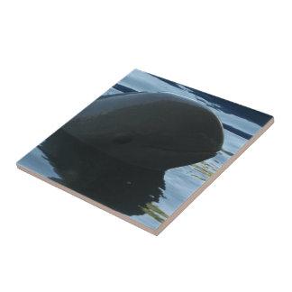 Irrawaddy Dolphin Peek-A-Boo Tile