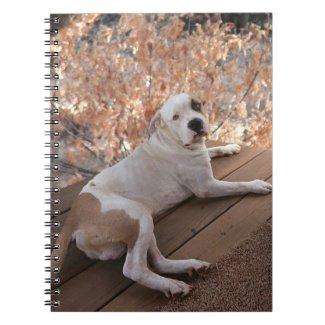 Irresistible Porch Dog Notebook
