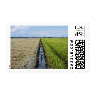 irrigation channel in between rice fields postage