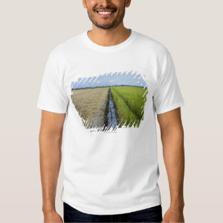 irrigation channel in between rice fields t shirt