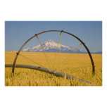 Irrigation Pipe in Field Poster