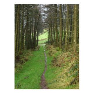 Irsh woods postcard