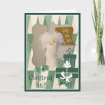 Is it Christmas Yeti? Holiday Card