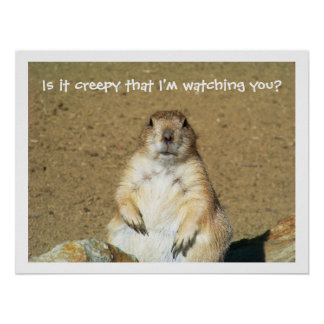 """""""Is it creepy that I'm watching you?"""" Prairie Dog Poster"""
