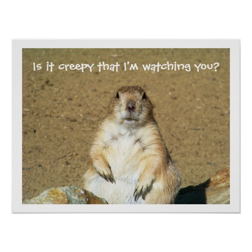 Is It Creepy That Im Watching You Prairie Dog Poster
