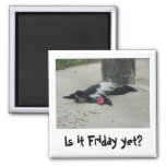 Is it Friday yet? Funny monkey magnet