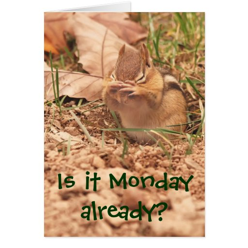 Is It Monday Already Chipmunk Card Zazzle