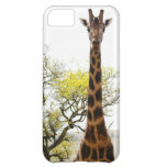 Is that a Giraffe in your pocket, or... for iPhone iPhone 5C Case