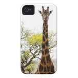 Is that a Giraffe in your pocket, or... for iPhone Case-Mate iPhone 4 Case