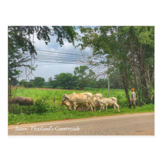 """Isaan, Thailand""""s Countryside Postcard"""